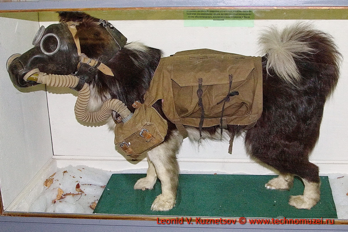 Связная собака в Артиллерийском музее