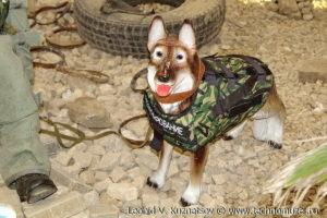 """Собака-сапер на выставке """"Операция в Сирии"""" в парке Патриот"""