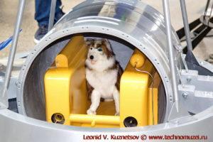 Спутник-2 с собакой Лайкой в павильоне Космос на ВДНХ